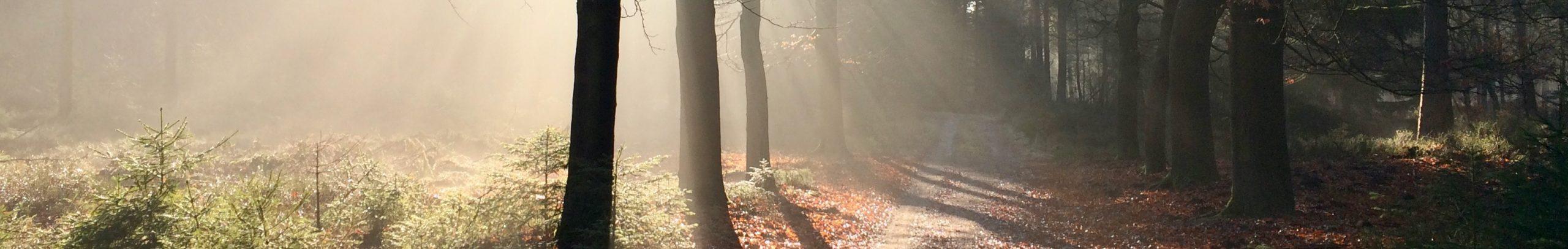 natuurretraite zonlicht in bos